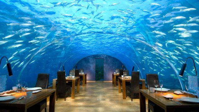 maldive cov