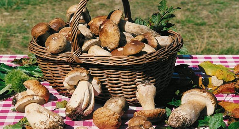 sagra dei funghi porcini oriolo romano