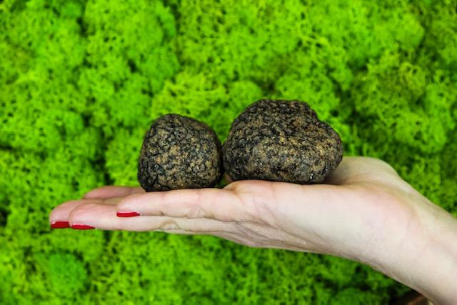 lady truffle