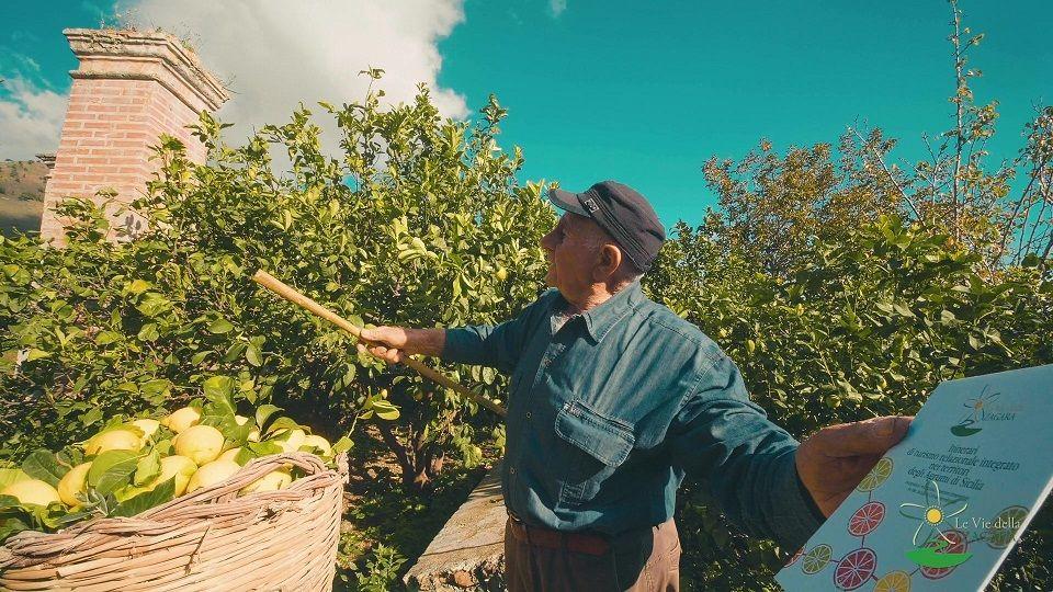 sicilia degli agrumi