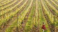 Cantine Aperte 2020 va on-line e porta il vino a casa tua