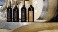 Omina Romana: un vino tra passato e futuro