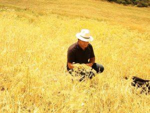 """Casaleni Natural Bio, il nuovo """"green franchising"""" nebroideo a Santo Stefano di Camastra visitabile anche online"""