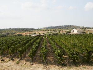 Cantina Palmeri: la Sicilia del vino tra speranze per il futuro, degustazioni e riconoscimenti internazionali