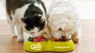 Qibo: ricette gourmet per cani e gatti