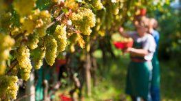 Vini naturali: cosa sono e perché piacciono