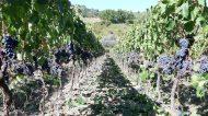 L'Agona a Terricciola, la Toscana che non t'aspetti