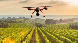 Qualità, Made in Italy ed export. Il turismo in Italia riparte dall'agricoltura, dal buon cibo e dal vino