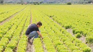Il Sud riparte dai giovani agricoltori