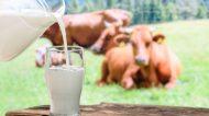 Campania: viaggio attraverso i latticini e i formaggi tipici della regione