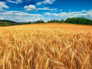 Di Grano in Grano, la dichiarazione d'amore ai cereali di Sara Papa e Antonio Polzella
