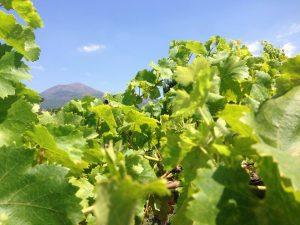 Il Vesuvio si riaccende con i vini della Cantina Matrone