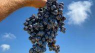 """Cantine De Gregorio, nella """"terra dell'amicizia""""  l'azienda familiare che punta sui vini, ricettività  e ristorazione"""