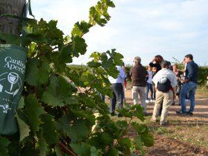 Cantine Aperte 2019: la più grande festa del vino e del turismo torna nel Lazio
