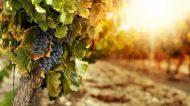 Terapia del Paesaggio: il turismo del vino riparte dal trekking nelle vigne