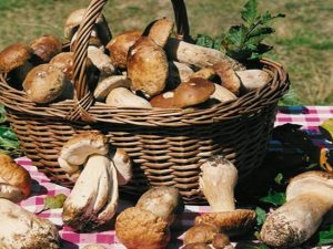 A Oriolo Romano torna la Sagra del Fungo Porcino