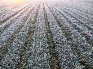 Il freddo mette in ginocchio l'agricoltura italiana