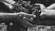 La viticoltura sostenibile, le cantine siciliane puntano sulle certificazioni per una società migliore