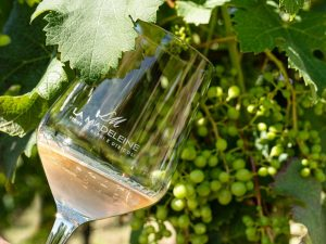 La Madeleine. Massimo D'Alema racconta la sua nuova avventura vinicola a Narni