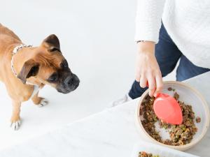Ollie, il (super) food delivery per cani