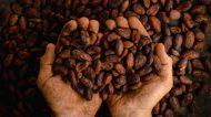 """Aprilia, Cacao & Caffè: quando la Qualità fa provincia. Due Indirizzi """"Specialty""""da Memorizzare"""