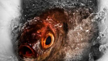 Che pesce sono? L'app che ve lo dice