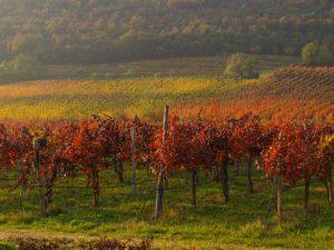 Beyond The Lens: il vino in fotografia