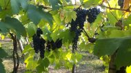 Il Podere Veneri Vecchio, la storia di un vino scandita dal Tempo
