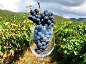 Da Nord a Sud: 10 vini (+2) per la primavera