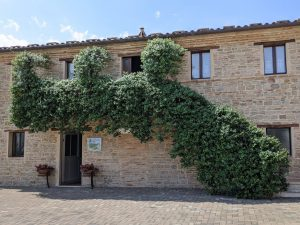 Espressioni di Verdicchio: viaggio alla scoperta del vitigno marchigiano – Sartarelli