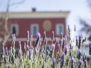 Cilento: la storia, l'eleganza e la cucina gourmet di Tenuta Duca Marigliano