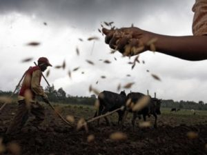 La Terra Trema: il buono e il bello dell'agricoltura