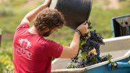 Alla scoperta dei vini Todaro nella Valle dello Jato, culla di Carricante e Perricone