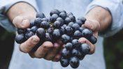 Da Eataly Firenze arriva la Festa dell'Uva
