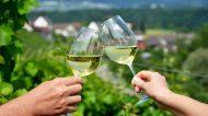 Espressioni di Verdicchio: viaggio alla scoperta del vitigno marchigiano – 1a tappa