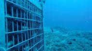 Elixir Falernum: alla scoperta del liquore affinato in fondo al mare