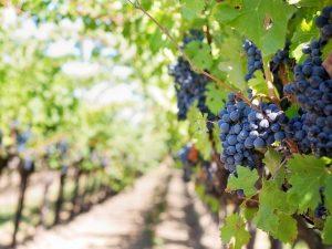 CrowdWine: nasce la prima piattaforma di crowdfunding dedicata al vino