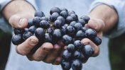 I vini dei vignaioli artigiani naturali