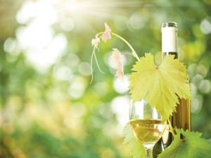 Vignaioli Artigiani Naturali: 2 giorni di vini naturali