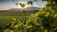 Terre Ospitali: la rete dei produttori dei Castelli Romani e dei Monti Prenestini