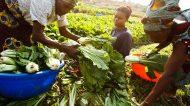 La Giornata Mondiale dell'Alimentazione