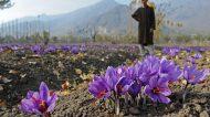In Iran nasce la prima banca dello Zafferano